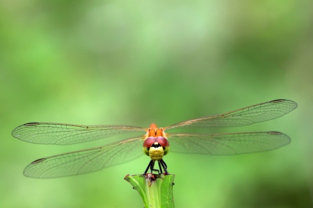 agachado: libélula amarilla se quedó en las plantas en el mundo natural