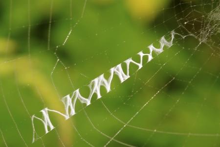 aracnidos: Tela de ara�a en la naturaleza, primer plano de la foto