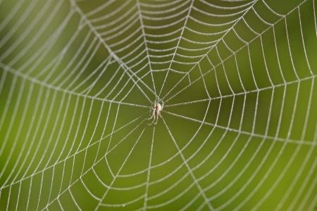 写真の野生では、クローズ アップの蜘蛛