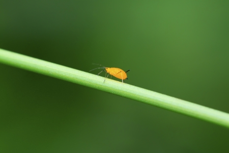 aphid: a kind of insects named aphid
