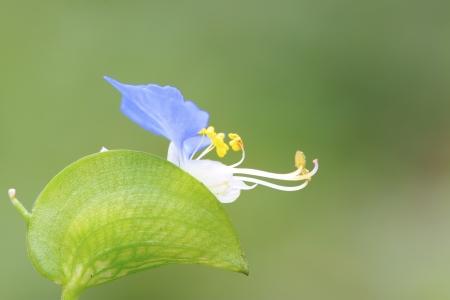 fu�sohle: Nahaufnahme der gr�nen Ente Mittelfu� Gras in der Wildnis Lizenzfreie Bilder