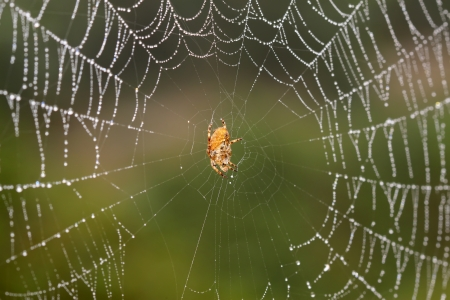 arachnids: spider on web in the nature, closeup of photo Stock Photo