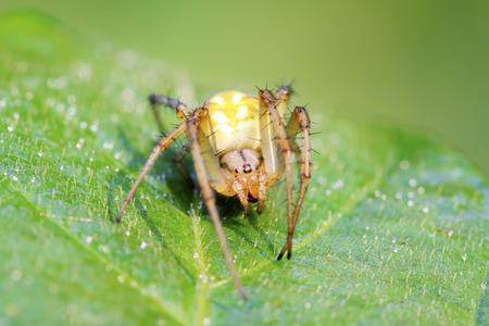 compound eye: spider on green leaf in the wild