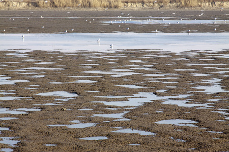 tidal flats marsh landscape, closeup of photo, north china