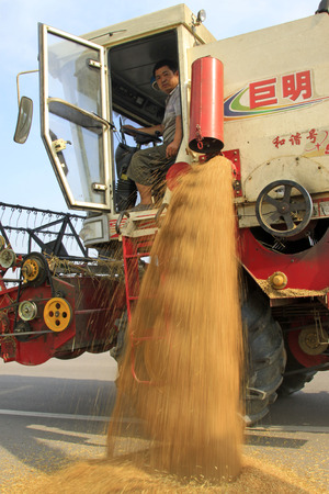 mechanization: LUANNAN COUNTY - JUNE 15: Harvester was threshing wheat in the field, on june 15, 2014, Luannan county, Hebei Province, China
