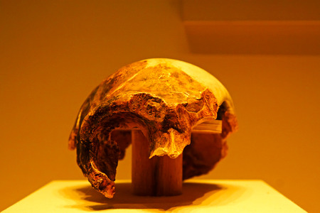 paleolithic: BEIJING, CHINA - MIDDLE PALEOLITHIC (CIRCA 140,000 YEARS AGO) : Maba Man Skull(replica), middle paleolithic (circa 140,000 years ago), collection in the China national museum, Beijing, China.  Editorial