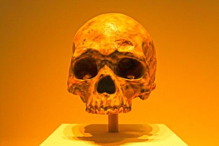 paleolithic: BEIJING, CHINA - MIDDLE PALEOLITHIC (CIRCA 70,000 YEARS AGO) : Liujiang Man Skull(replica), middle paleolithic (circa 70,000 years ago), collection in the China national museum, Beijing, China.