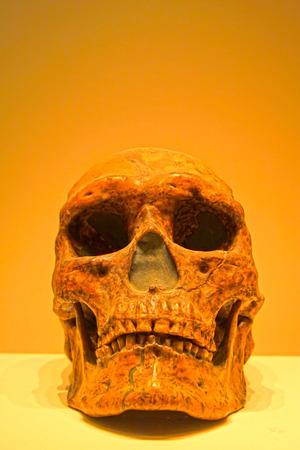 BEIJING,CHINA - UPPER PALEOLITHIC (CIRCA 30,000 YEARS AGO) : Upper Cave Man Skull(replica), upper paleolithic (circa 30,000 years ago), collection in the China national museum, Beijing, China.