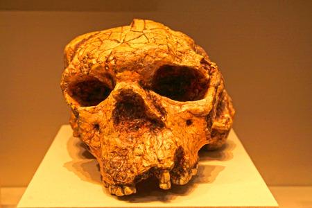 BEIJING, CHINA - EARLY PALEOLITHIC (CIRCA 1 million - 900,000 YEARS AGO) : Yuanxian Man skull(replica), early paleolithic ( circa 1 million - 900,000 years ago), collection in the China national museum, Beijing, China. Original unearthed at Xuetangliangzi