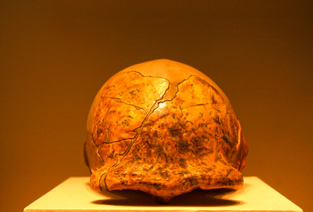 palaeolithic: BEIJING, CHINA - EARLY PALEOLITHIC (CIRCA 280,000-230,000 YEARS AGO) : Peking man skull (replica), early paleolithic (circa 280,000-230,000 years ago), collection in the China national museum, Beijing, China.