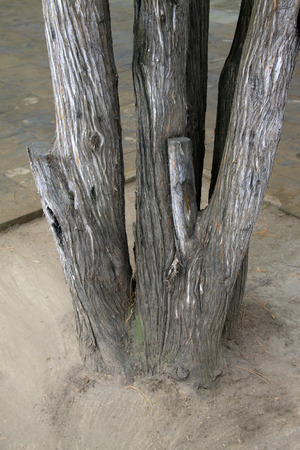 physiological: old tree roots on the ground, closeup photo