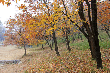 hebei: Color trees in chengde mountain resort, Chengde City, Hebei Province, China Stock Photo