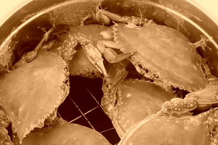 crab pot: crab in stainless steel pot Stock Photo
