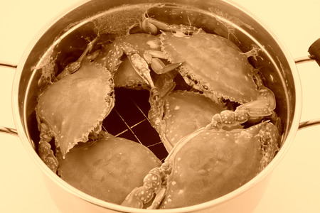 crab pot: crab in stainless steel pot on a white background