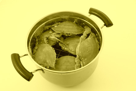 stainless steel pot: crab in stainless steel pot on a white background