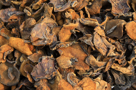shrinkage: Dried mushrooms, closeup of photo