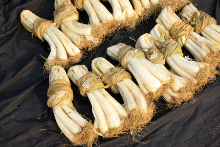 encogimiento: chalota seca en un mercado Foto de archivo