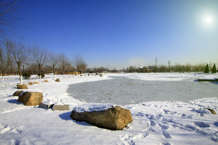 dazzle: wild natural scenery in winter