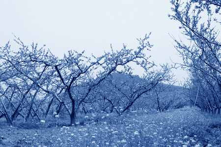 travel features: Peach garden scenery in the spring, beijing, china Stock Photo