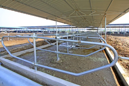 metal handrail: metal isolation handrail in a dairy farms Editorial