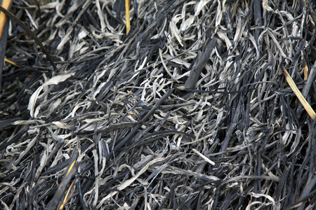 carbide: grass ashes, closeup of photo