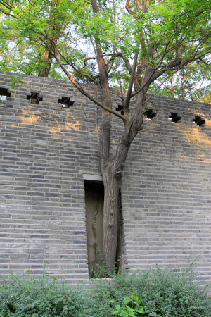 feature wall: walls and trees, closeup of photo