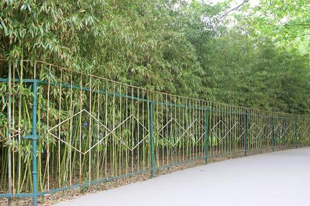 vigorous: bamboo forest, closeup of photo