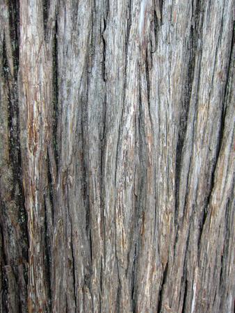 mottled skin: dry tree bark in the wild, closeup of photo Stock Photo