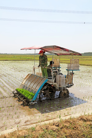 tangshan city: Tangshan city - May 29: rice planting mechanization operation in the fields, on May 29, 2016, tangshan city, hebei province, China Editorial