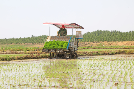 mechanization: Tangshan city - May 29: rice planting mechanization operation in the fields, on May 29, 2016, tangshan city, hebei province, China Editorial
