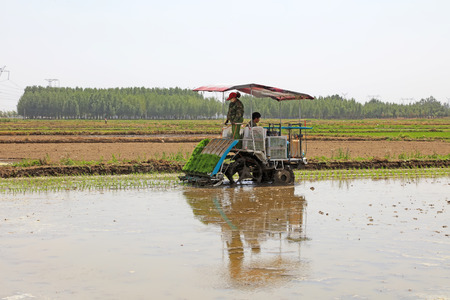 mechanization: Tangshan city - May 29: rice planting mechanization operation in the fields. Editorial