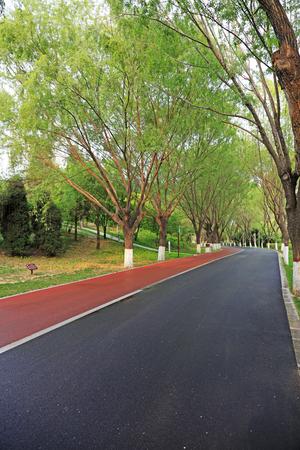 Park road landscape Stock Photo
