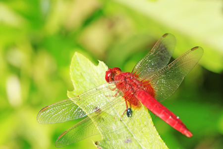 a red dragonfly stay in the wires Stock Photo