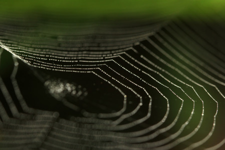 spider web in the wild Stock Photo
