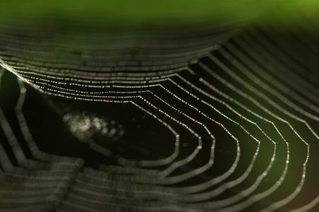 arachnids: spider web in the wild Stock Photo