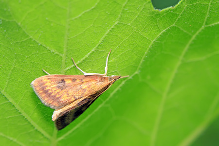 Moth insects on plant in the wild