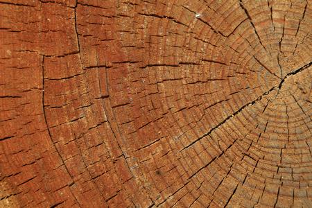 Tree rings and cracks, closeup of photo