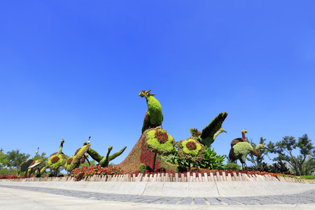 Tangshan - August 27: peacock and red-crowned crane sculpture green plants, on August 27, 2016, tangshan city, hebei province, China