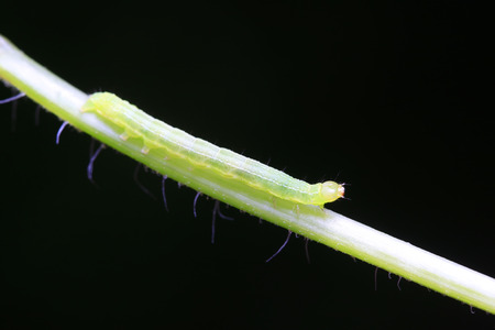 tiny insects on plant in the wild