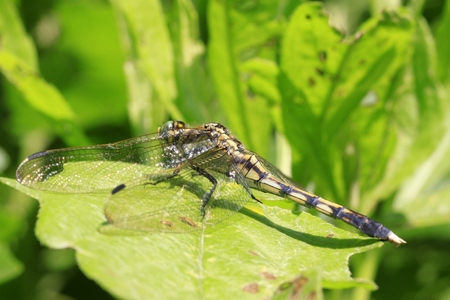 Dragonfly stay on the plant