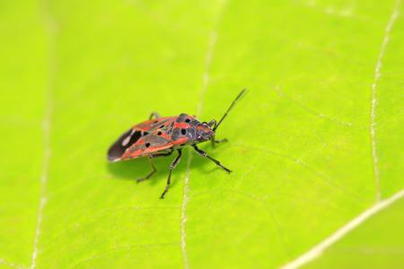 stinkbug on plant in the wild