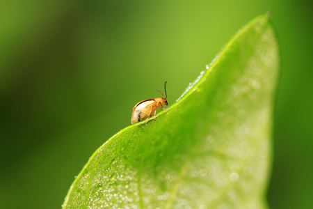 leaf beetle on plant in the wild Stock Photo