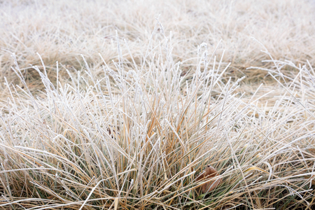 Subtilis in frost and snow Stock Photo