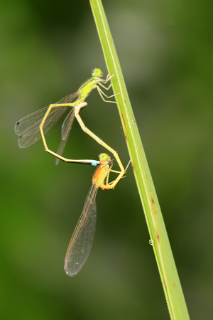 Dragonfly on plant in the wild