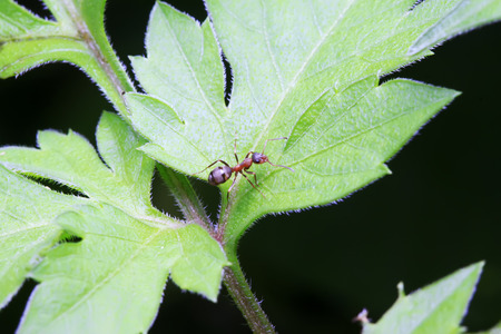 Formicidae insects on plant in the wild