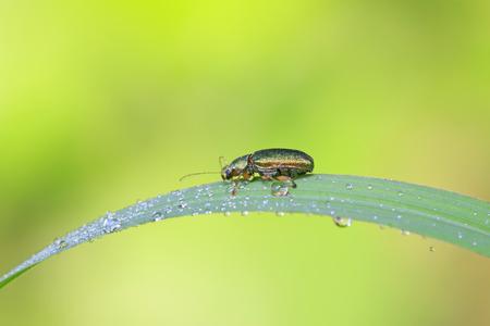 leaf beetle on plant in the wild Reklamní fotografie