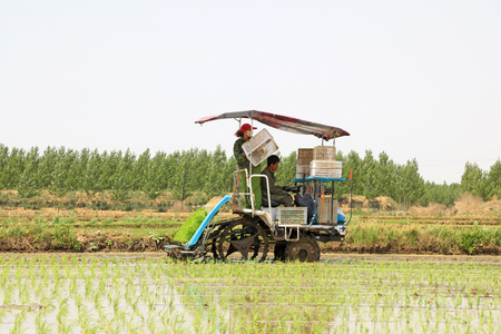 Tangshan city - May 29: rice planting mechanization operation in the fields, on May 29, 2016, tangshan city, hebei province, China Editorial