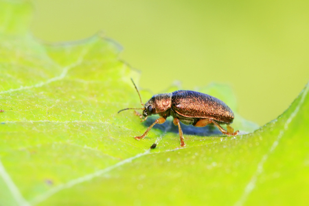 leaf beetle on plant in the wild Stok Fotoğraf