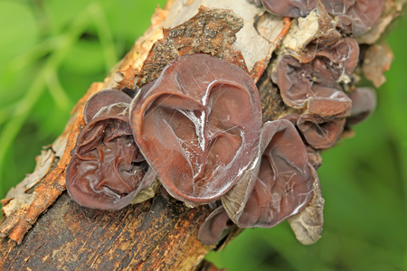 agaric on corruption wood