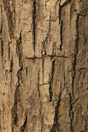 Old bark Banco de Imagens